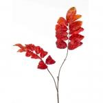 Siertak Melianthus Oranje 90CM
